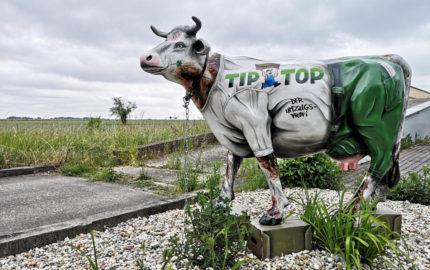 Unser Firmenmaskottchen: Die Tip Top Kuh